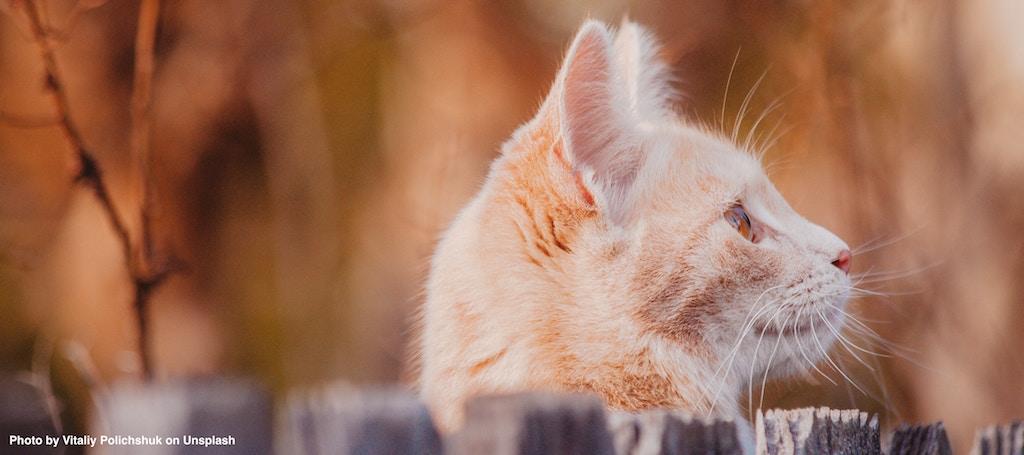 Motivation: Wo gibt's diese Katzenleckerlis?